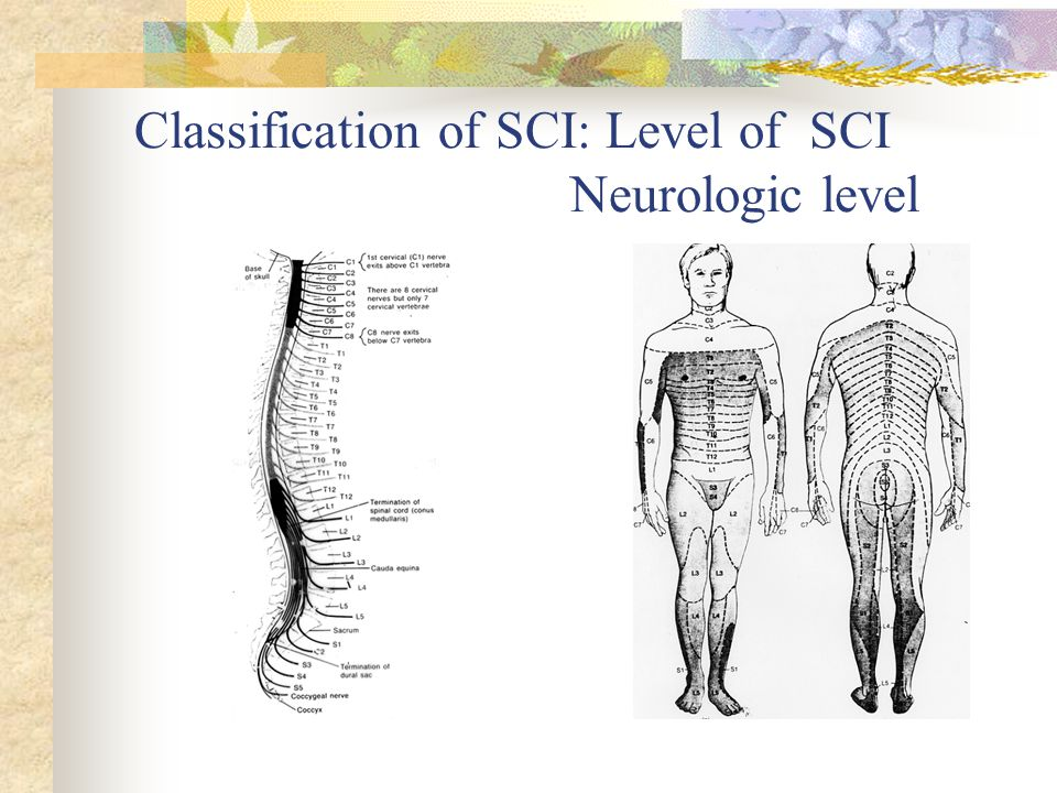 Classification of SCI: Level of SCI Neurologic level