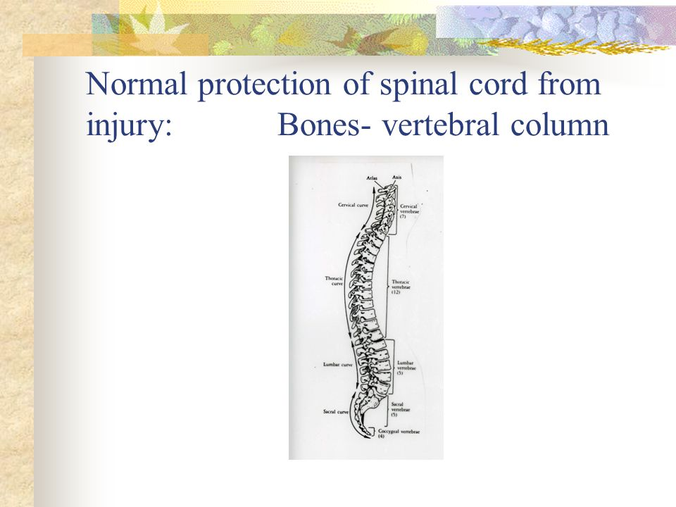 Normal protection of spinal cord from injury: Bones- vertebral column