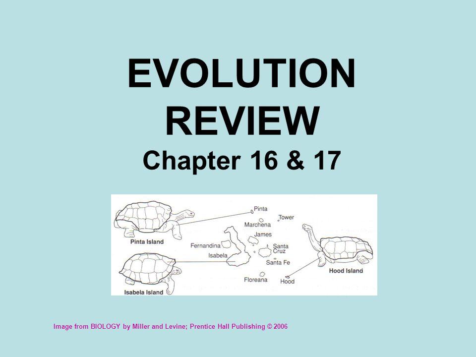 EVOLUTION REVIEW Chapter 16 & 17