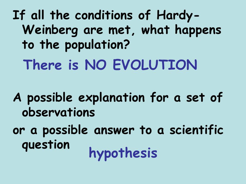 There is NO EVOLUTION hypothesis