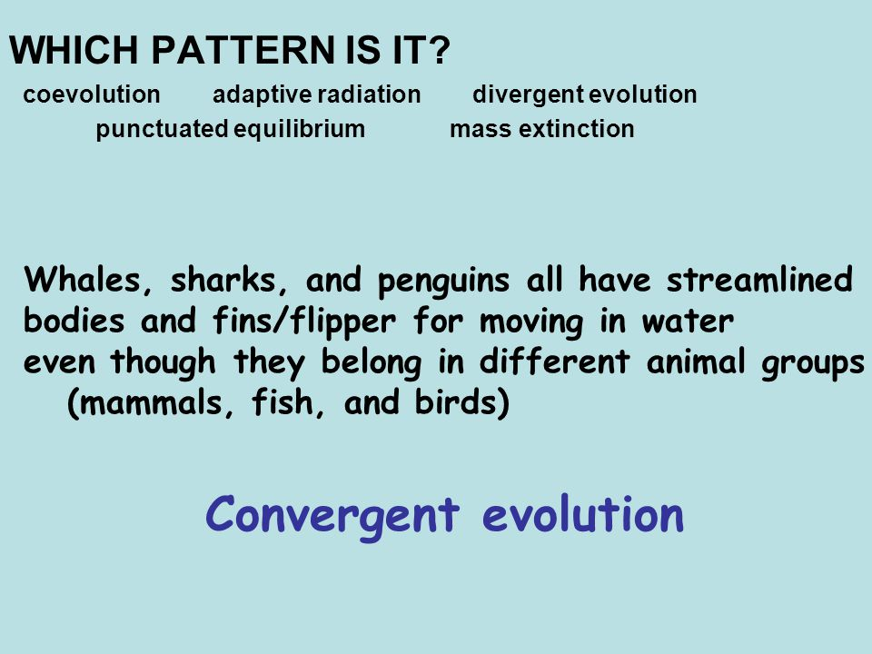 Convergent evolution WHICH PATTERN IS IT