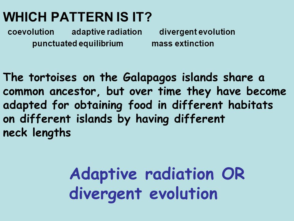Adaptive radiation OR divergent evolution