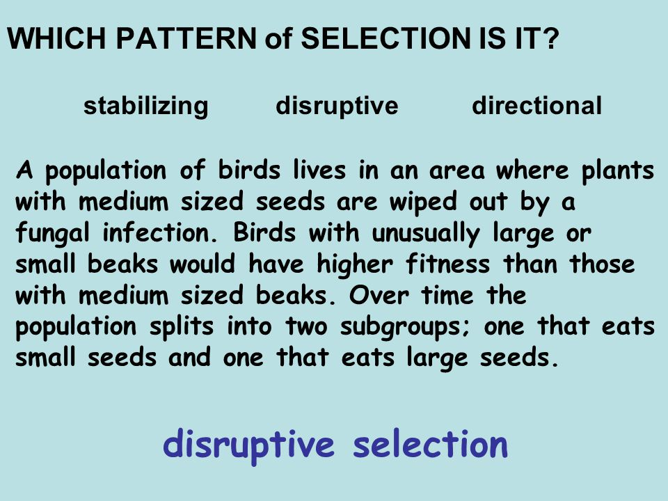 disruptive selection WHICH PATTERN of SELECTION IS IT