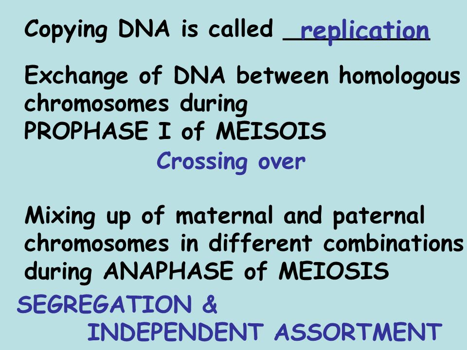 replication Copying DNA is called __________