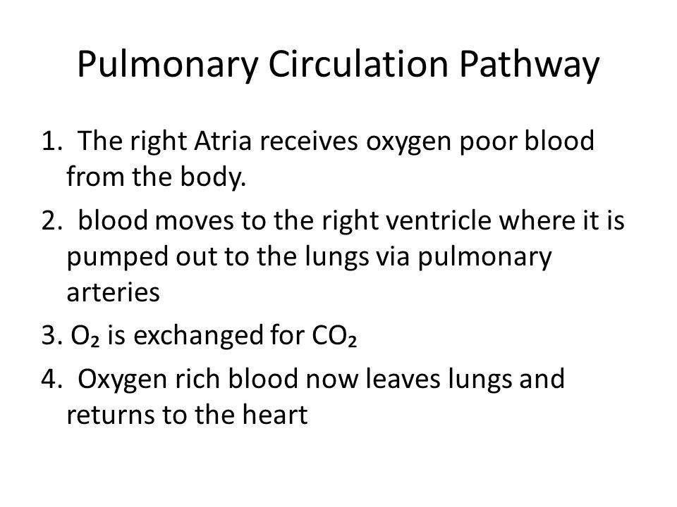 Pulmonary Circulation Pathway
