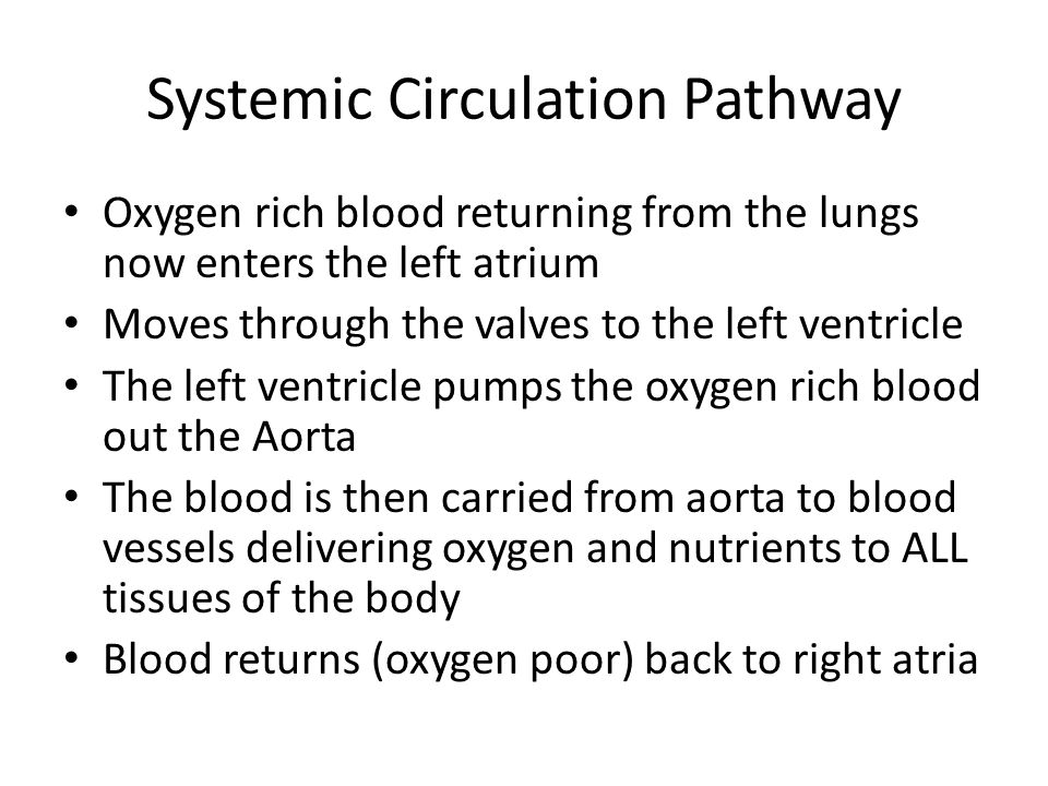 Systemic Circulation Pathway