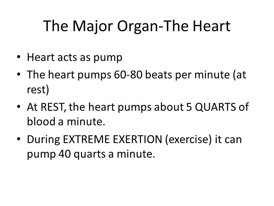 The Major Organ-The Heart