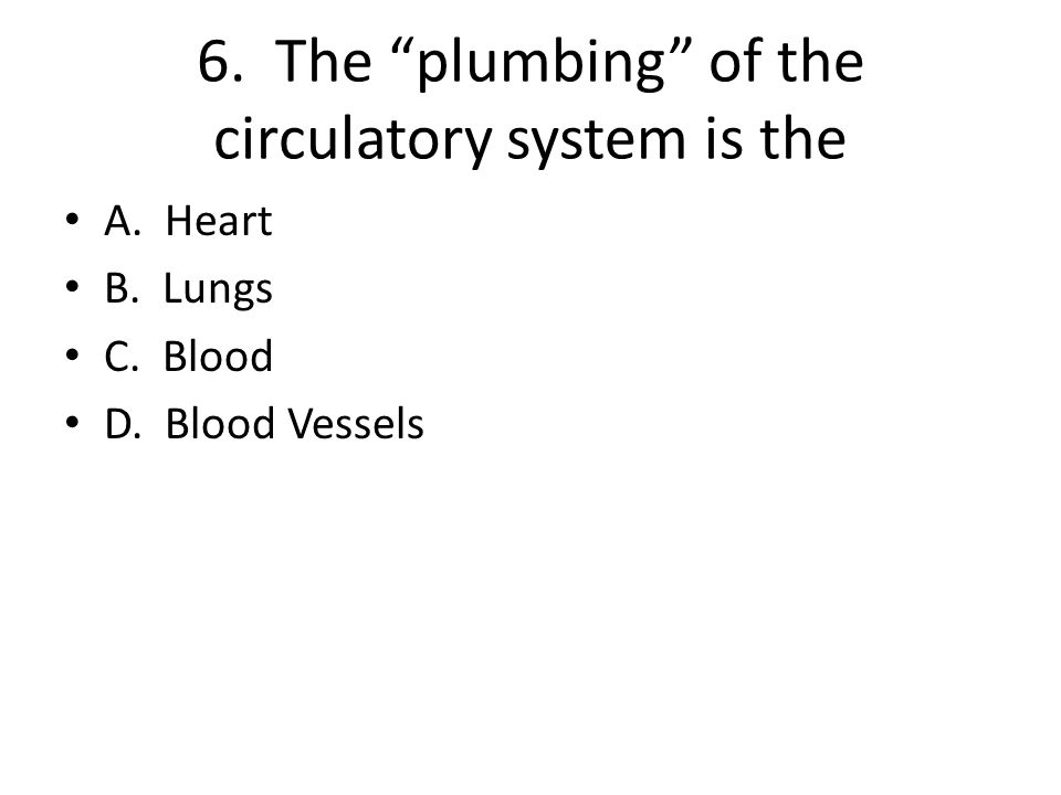 6. The plumbing of the circulatory system is the