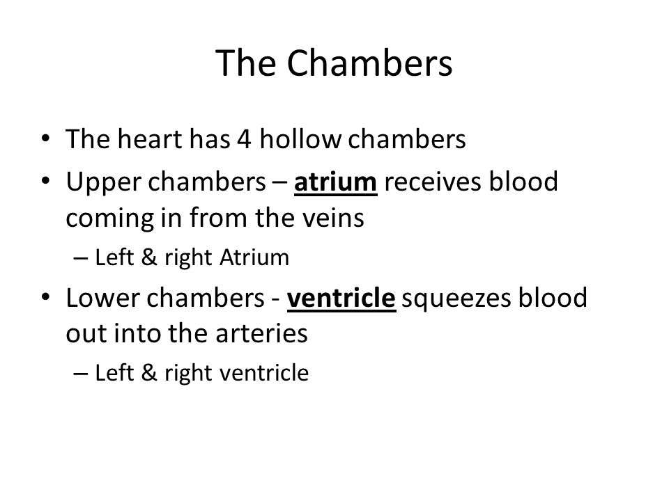 The Chambers The heart has 4 hollow chambers