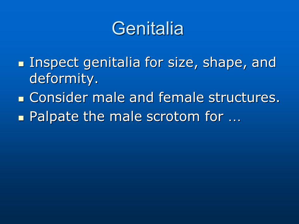 Genitalia Inspect genitalia for size, shape, and deformity.