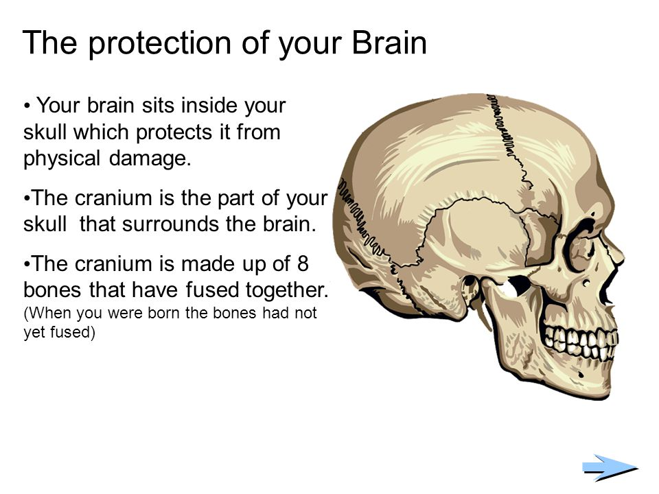 The protection of your Brain