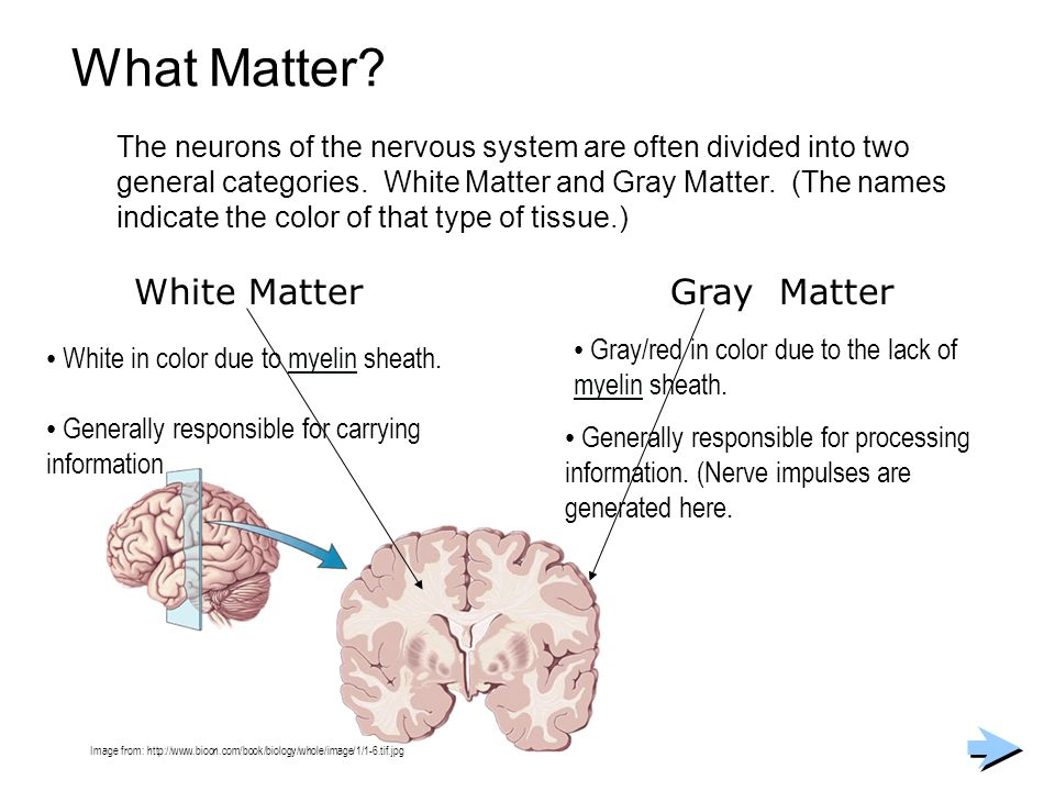 What Matter White Matter Gray Matter
