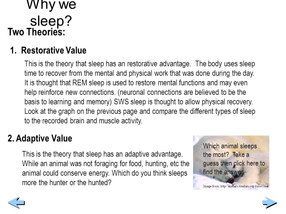 Why we sleep Two Theories: 1. Restorative Value 2. Adaptive Value