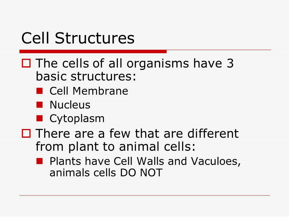 Cell Structures The cells of all organisms have 3 basic structures: