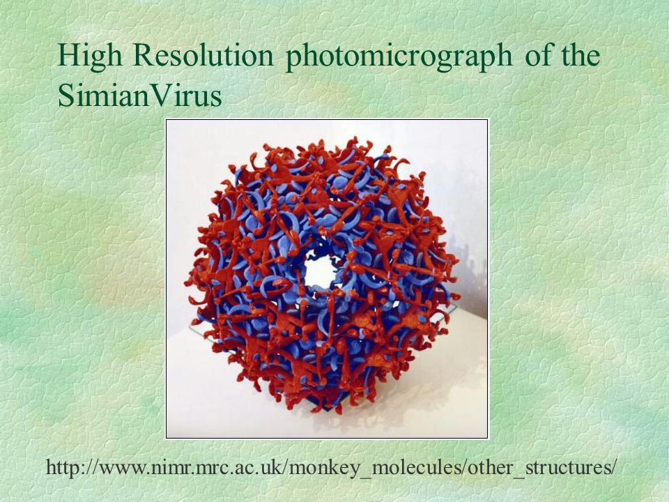High Resolution photomicrograph of the SimianVirus