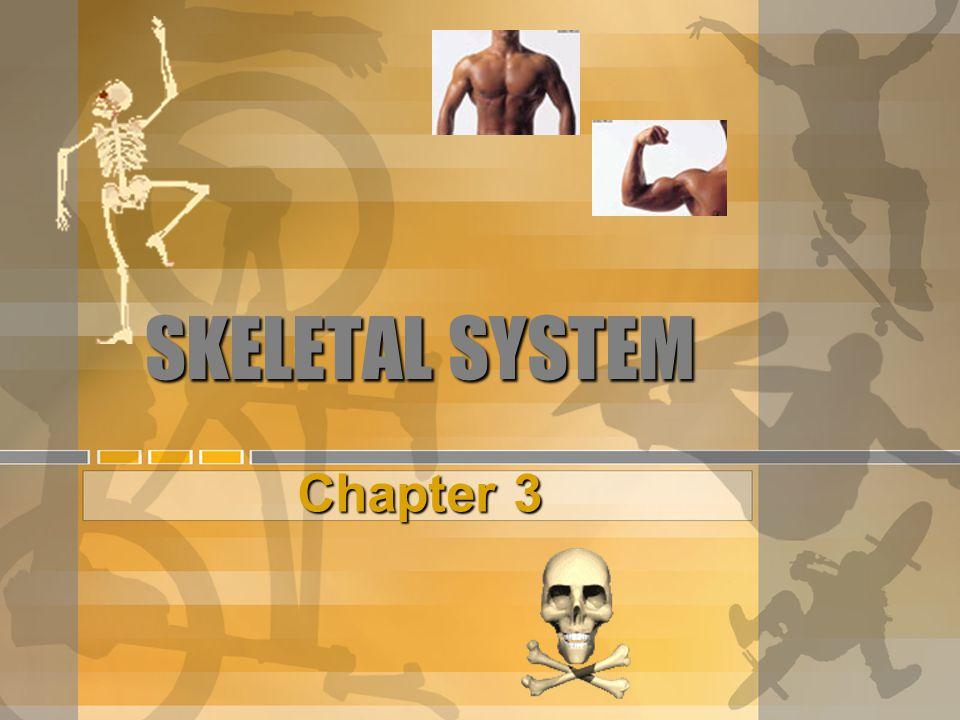 SKELETAL SYSTEM Chapter 3
