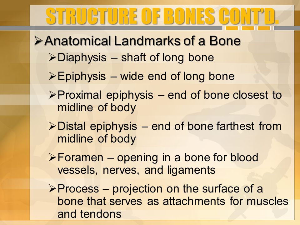STRUCTURE OF BONES CONT'D.
