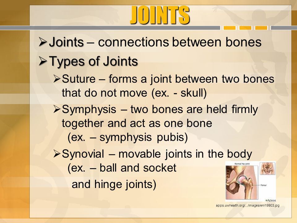 JOINTS Joints – connections between bones Types of Joints