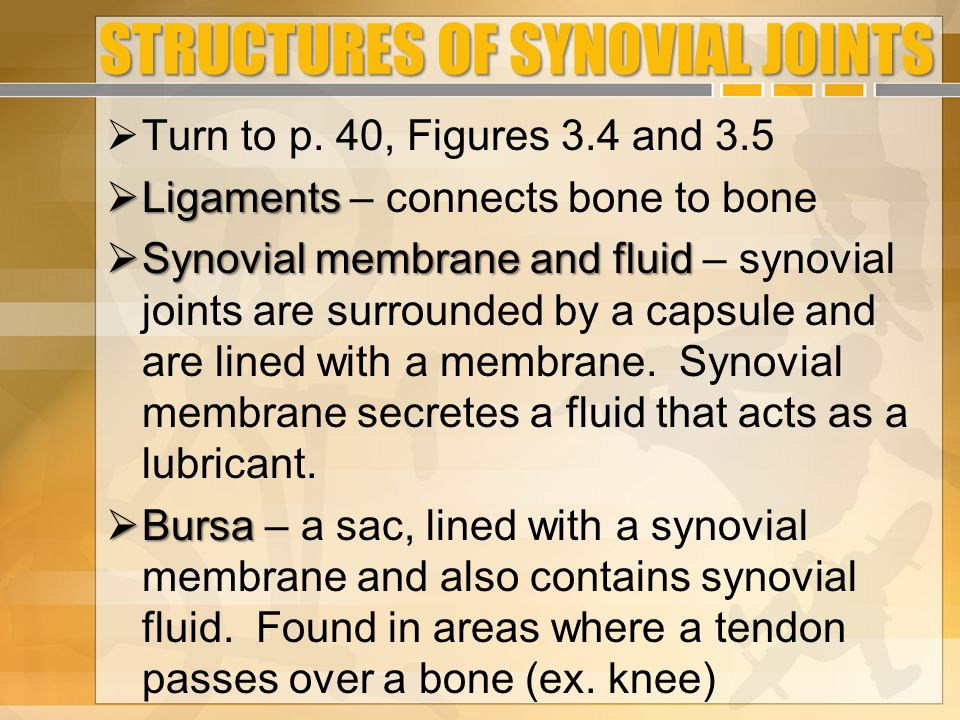 STRUCTURES OF SYNOVIAL JOINTS