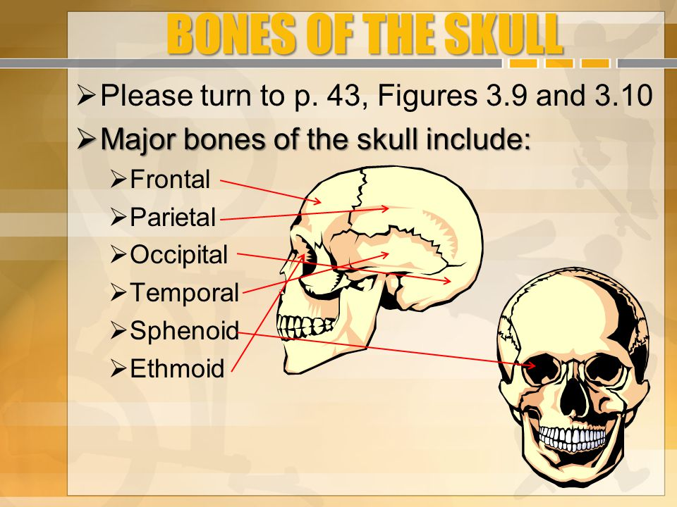 BONES OF THE SKULL Please turn to p. 43, Figures 3.9 and 3.10