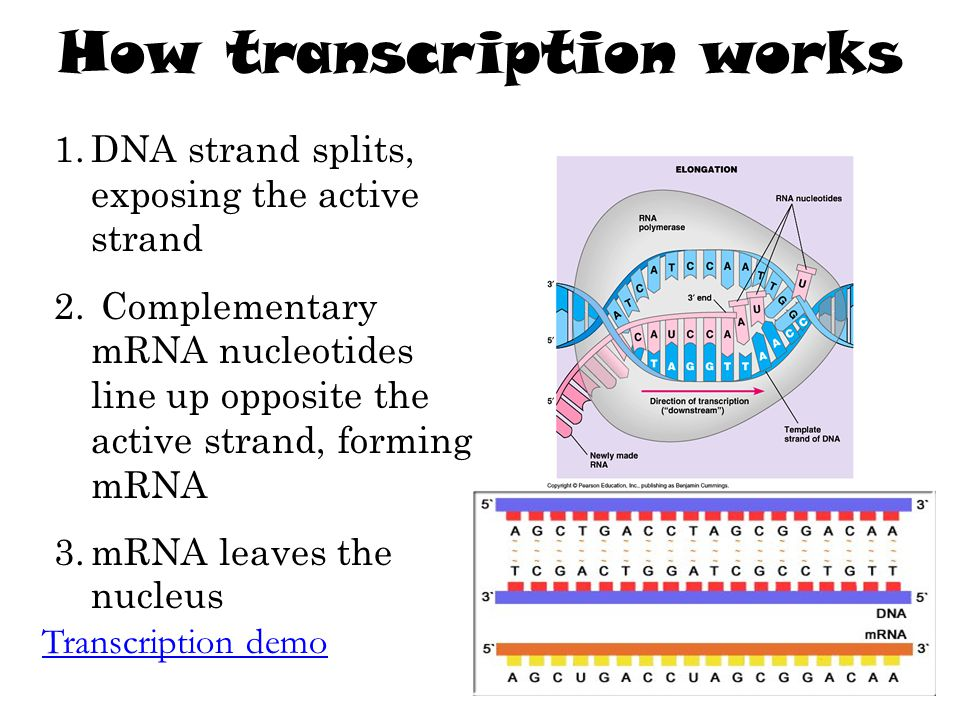 How transcription works