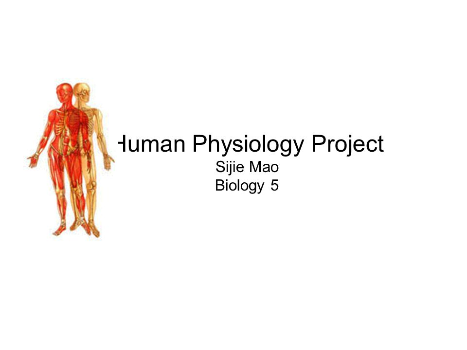 Human Physiology Project Sijie Mao Biology 5