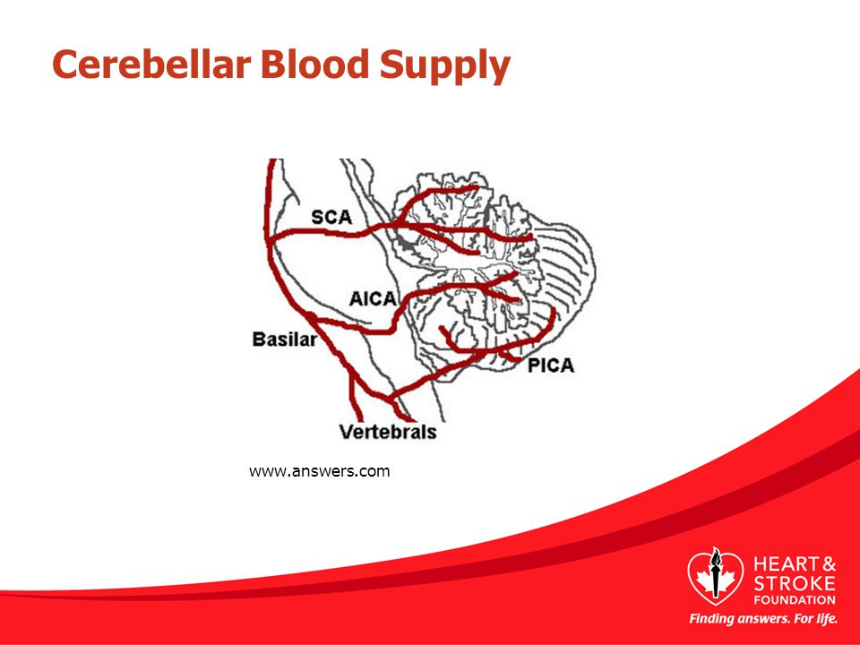 Cerebellar Blood Supply