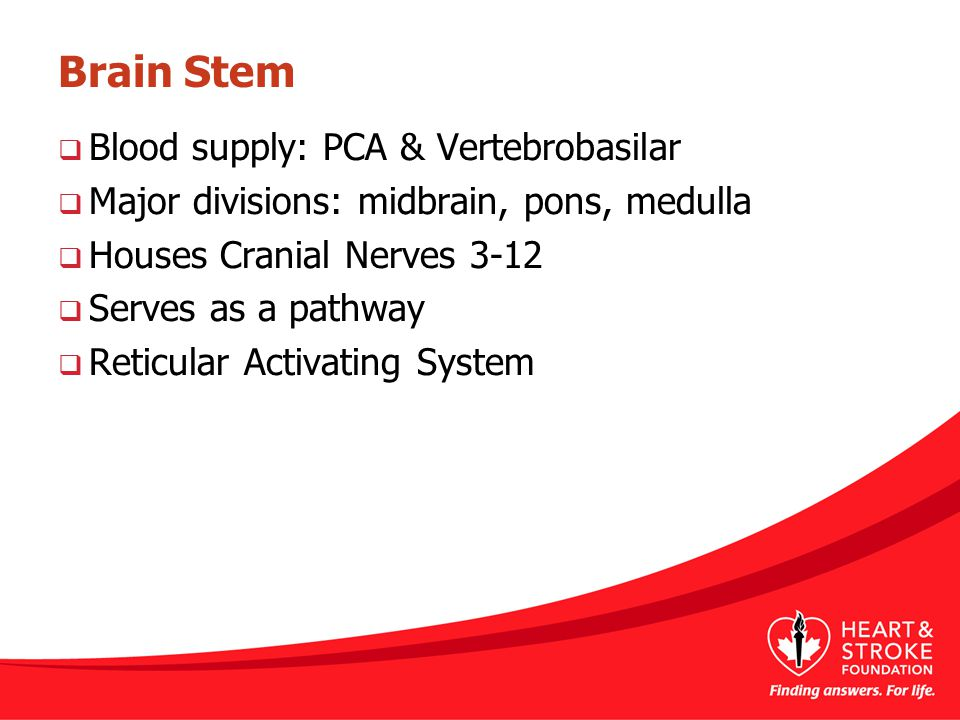 Brain Stem Blood supply: PCA & Vertebrobasilar
