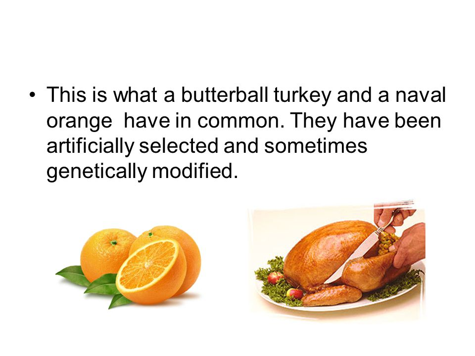 This is what a butterball turkey and a naval orange have in common