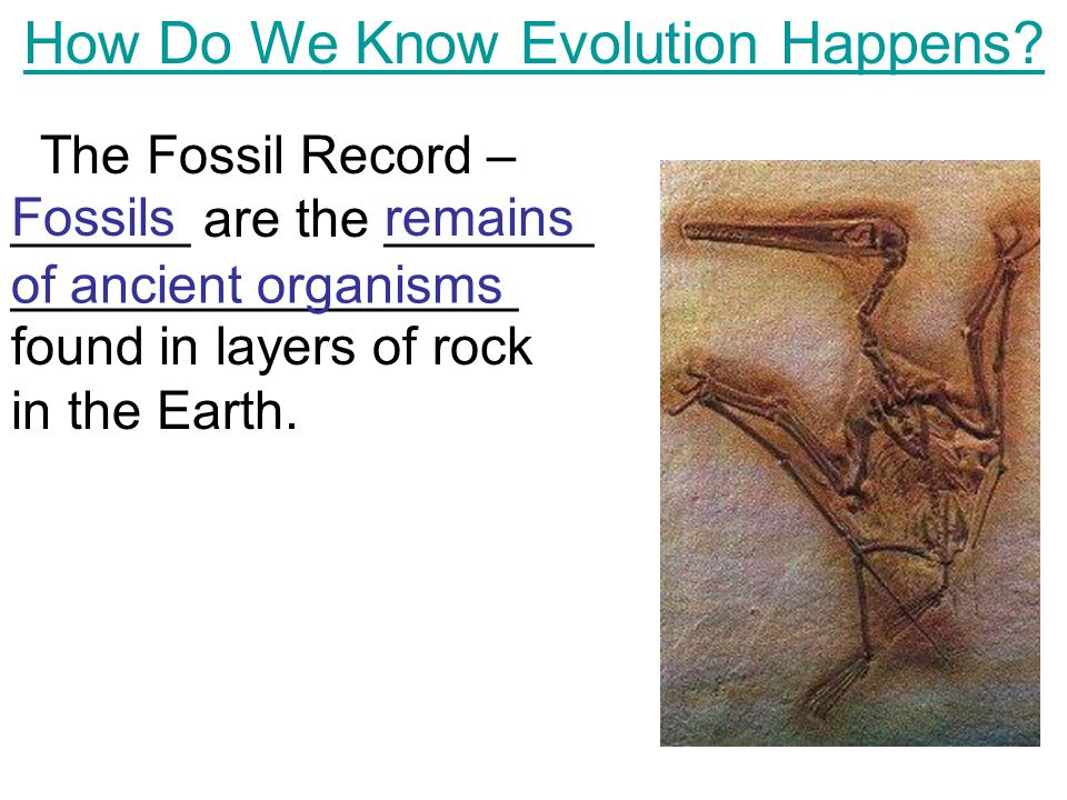 How Do We Know Evolution Happens