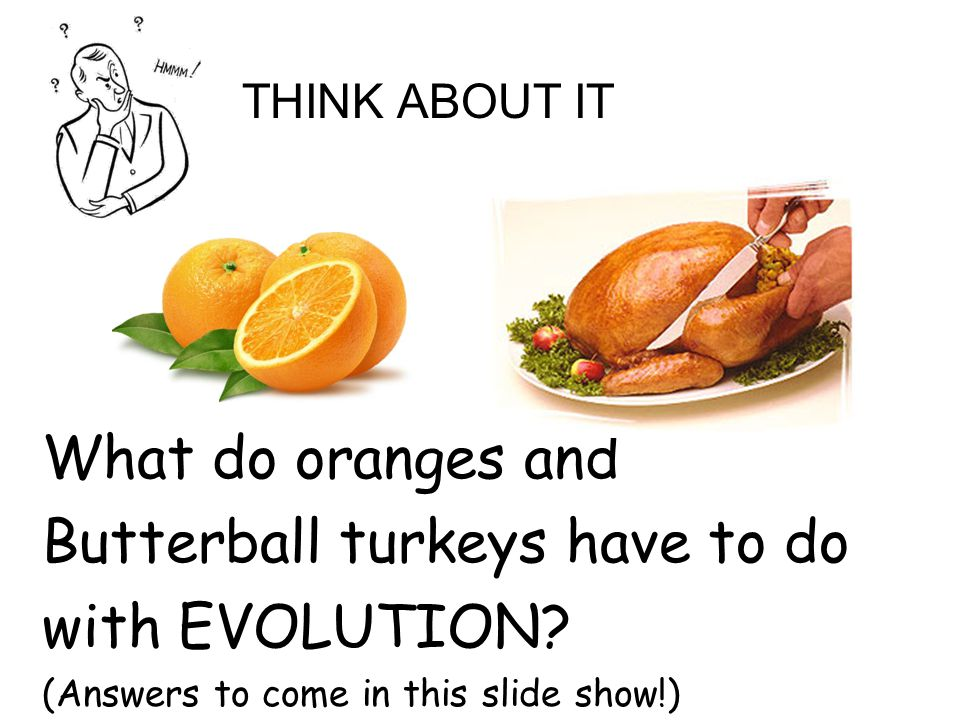 Butterball turkeys have to do with EVOLUTION