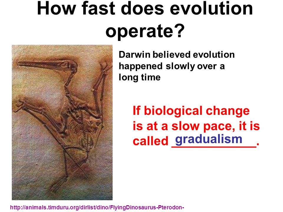 How fast does evolution operate