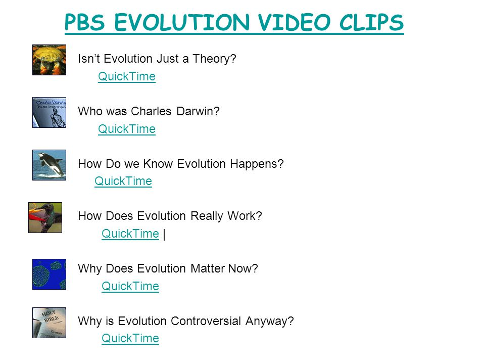 PBS EVOLUTION VIDEO CLIPS