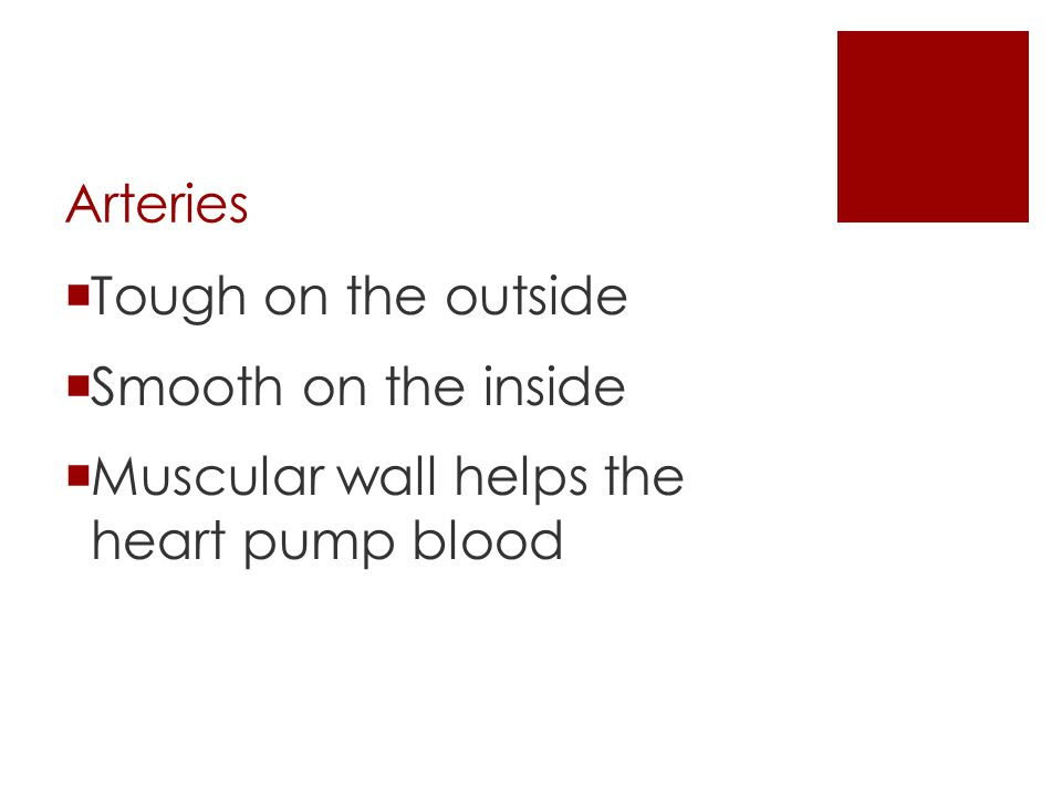 Arteries Tough on the outside Smooth on the inside Muscular wall helps the heart pump blood