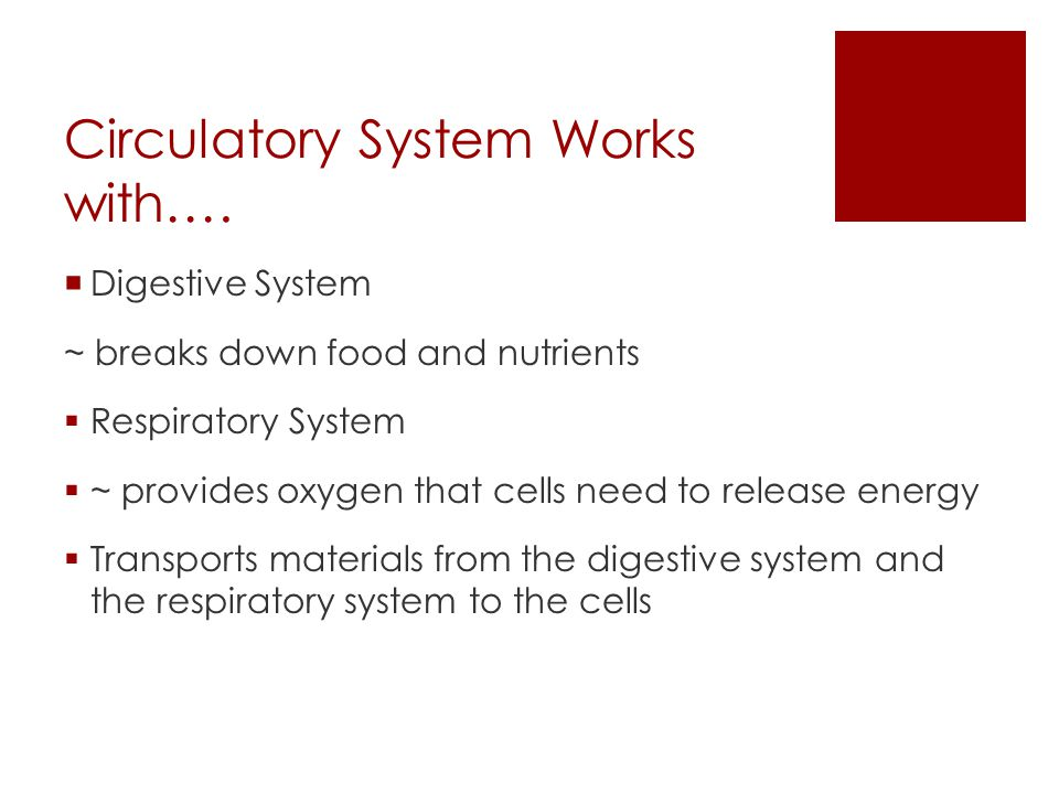 Circulatory System Works with….