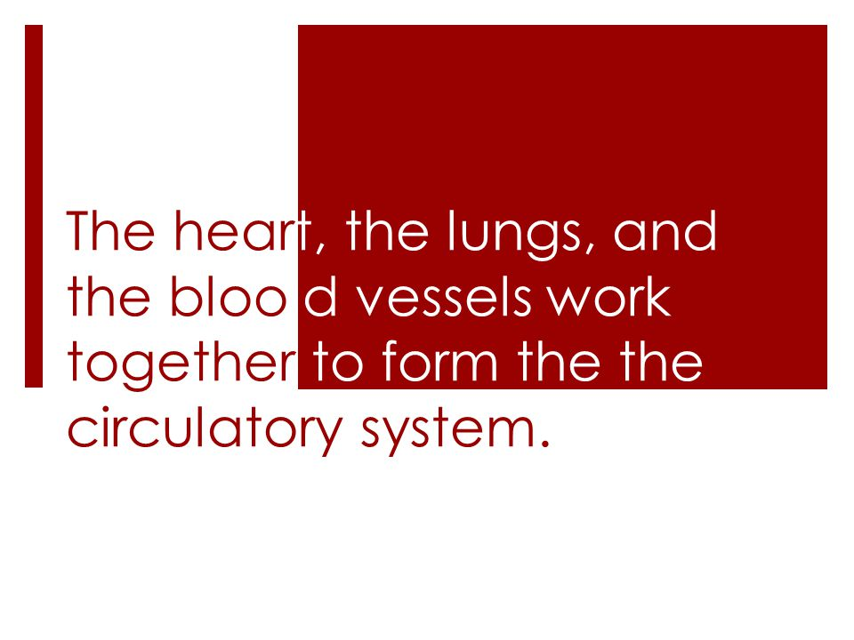 The heart, the lungs, and the bloo d vessels work together to form the the circulatory system.
