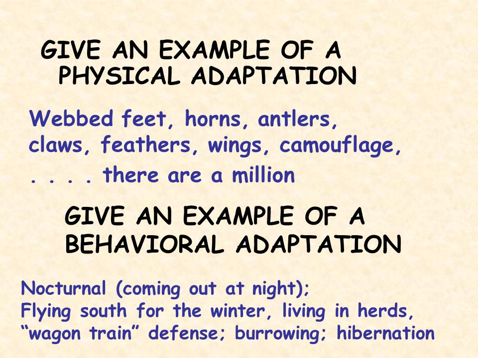 GIVE AN EXAMPLE OF A PHYSICAL ADAPTATION