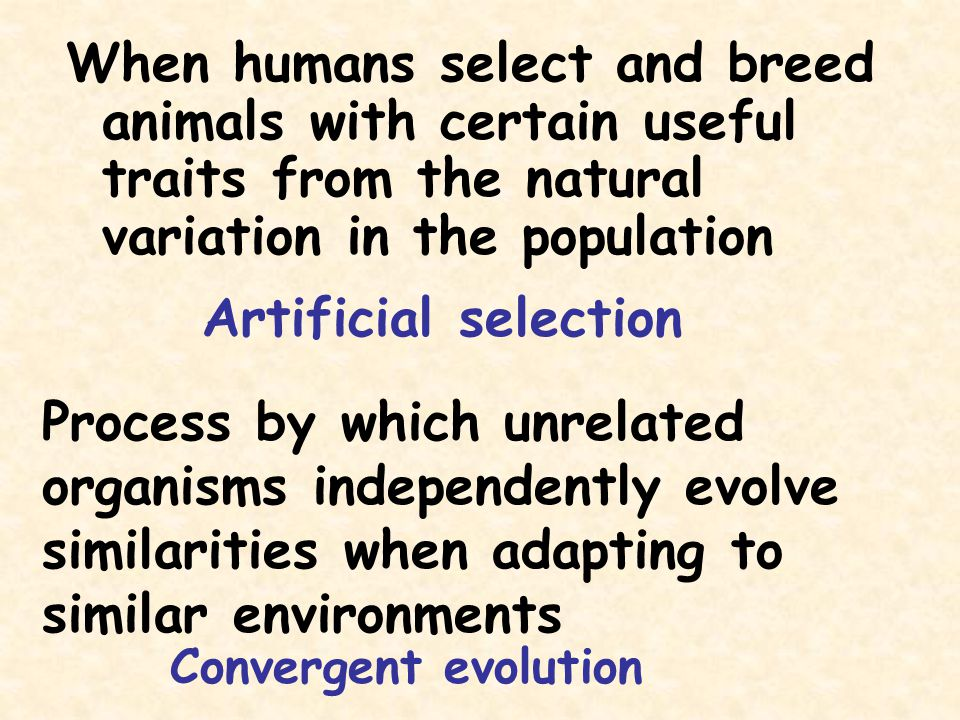 Process by which unrelated organisms independently evolve