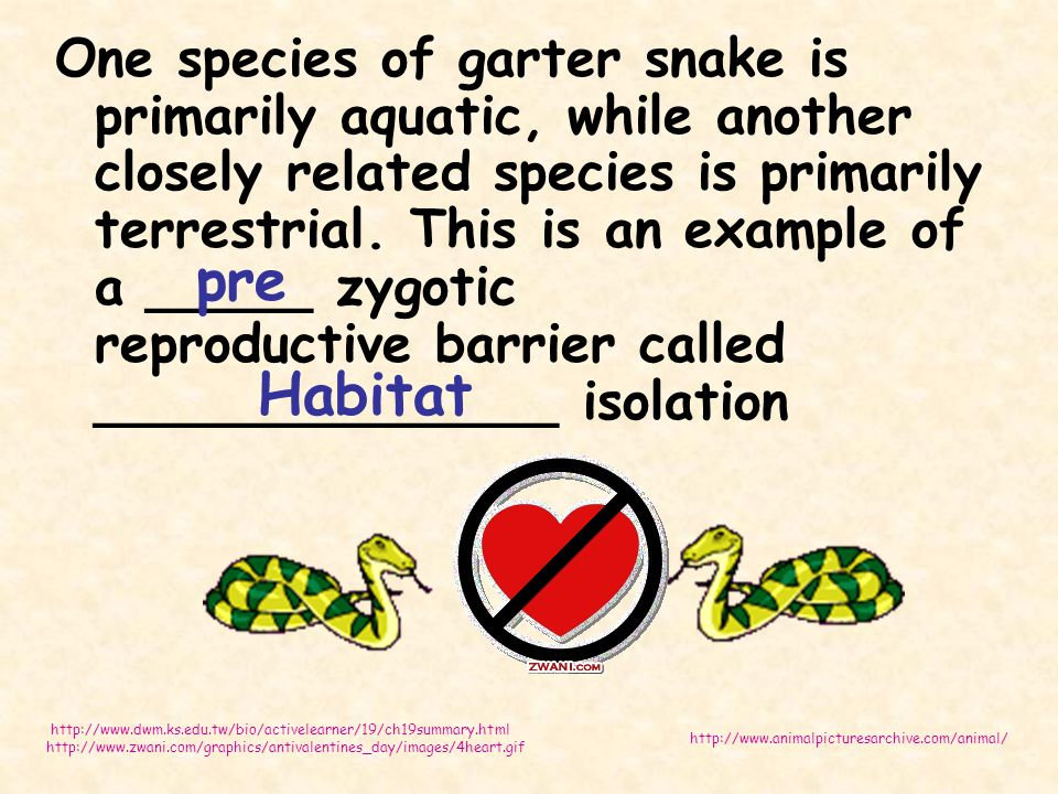 One species of garter snake is primarily aquatic, while another closely related species is primarily terrestrial. This is an example of a _____ zygotic reproductive barrier called ______________ isolation