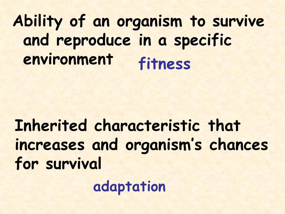 Inherited characteristic that increases and organism's chances
