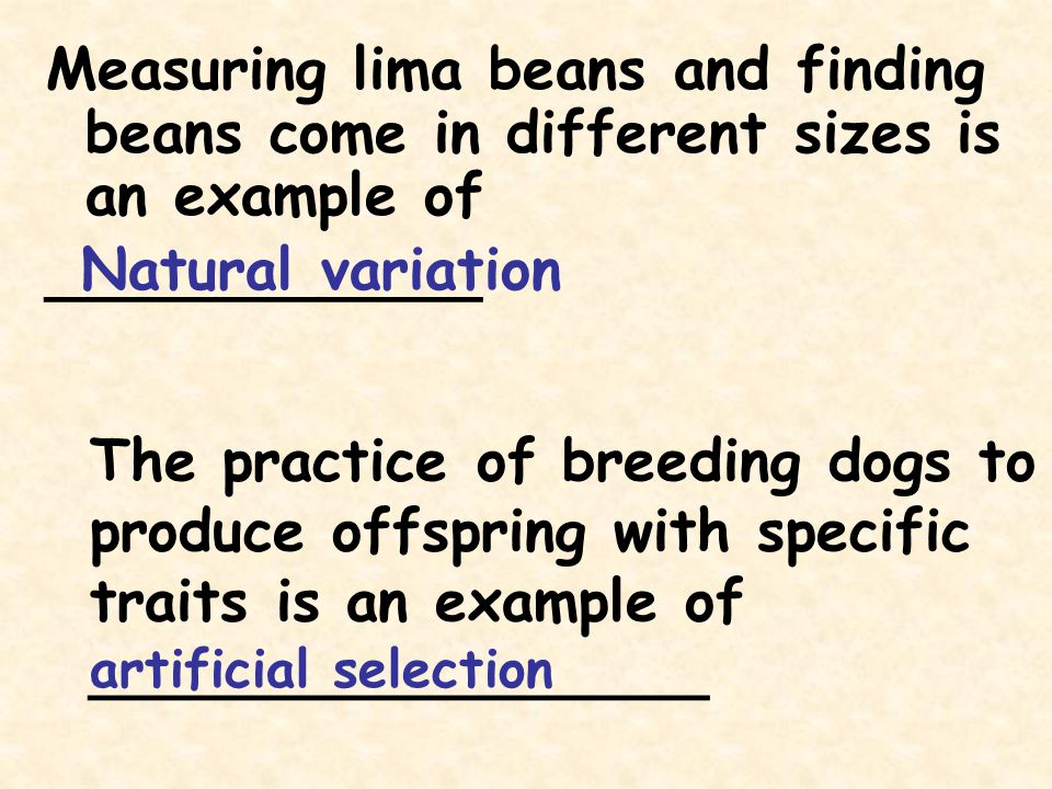 The practice of breeding dogs to produce offspring with specific