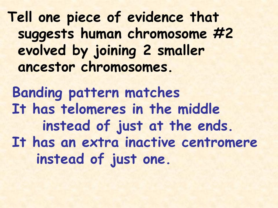 Tell one piece of evidence that suggests human chromosome #2 evolved by joining 2 smaller ancestor chromosomes.