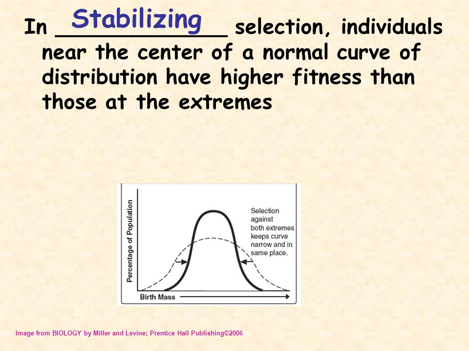 Stabilizing In _____________ selection, individuals near the center of a normal curve of distribution have higher fitness than those at the extremes.