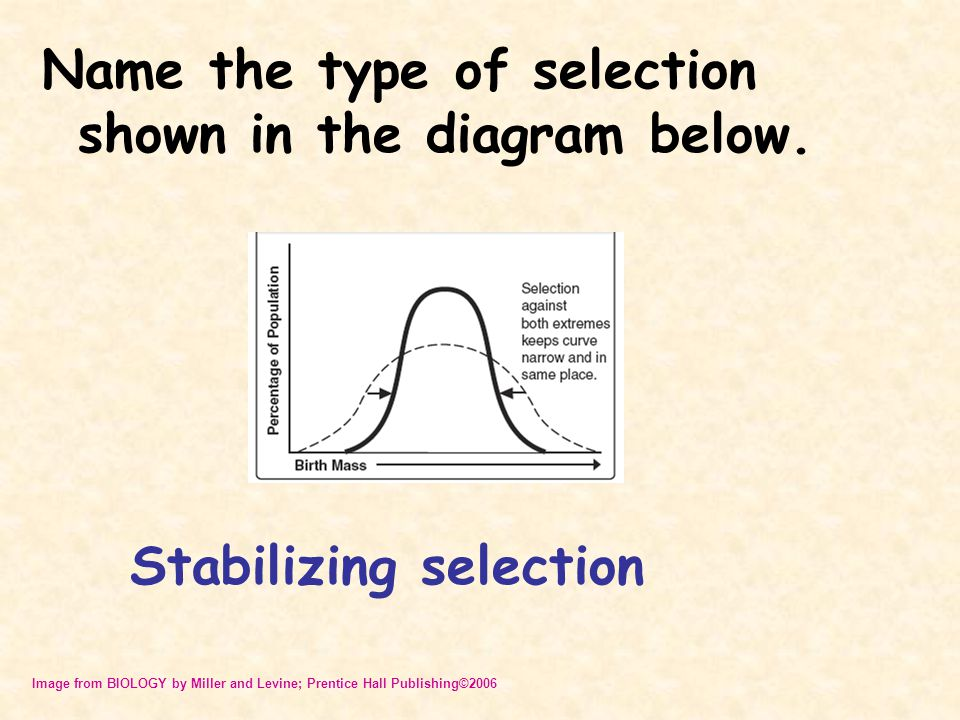 Name the type of selection shown in the diagram below.