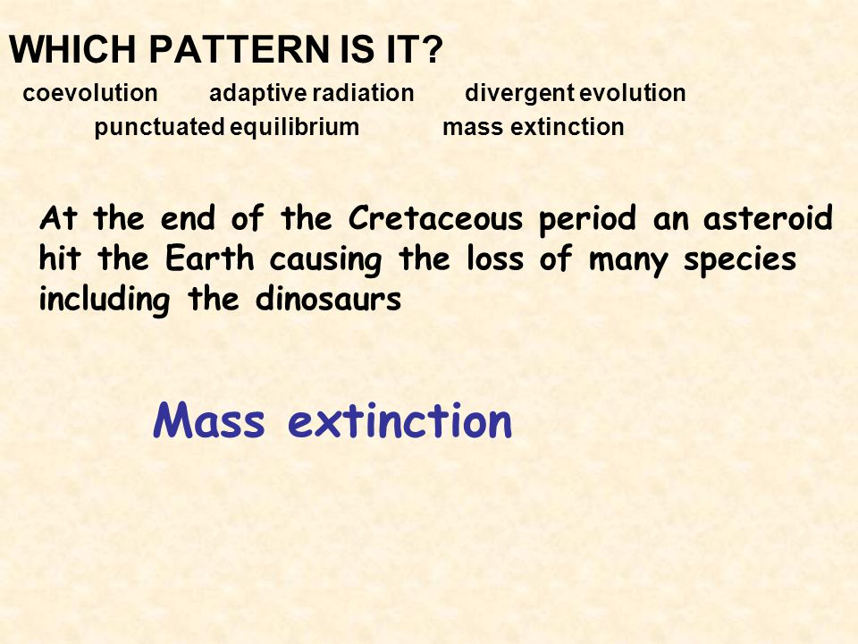 Mass extinction WHICH PATTERN IS IT