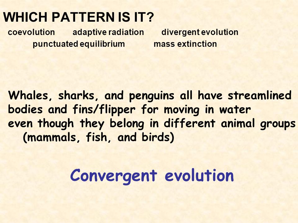 Convergent evolution WHICH PATTERN IS IT
