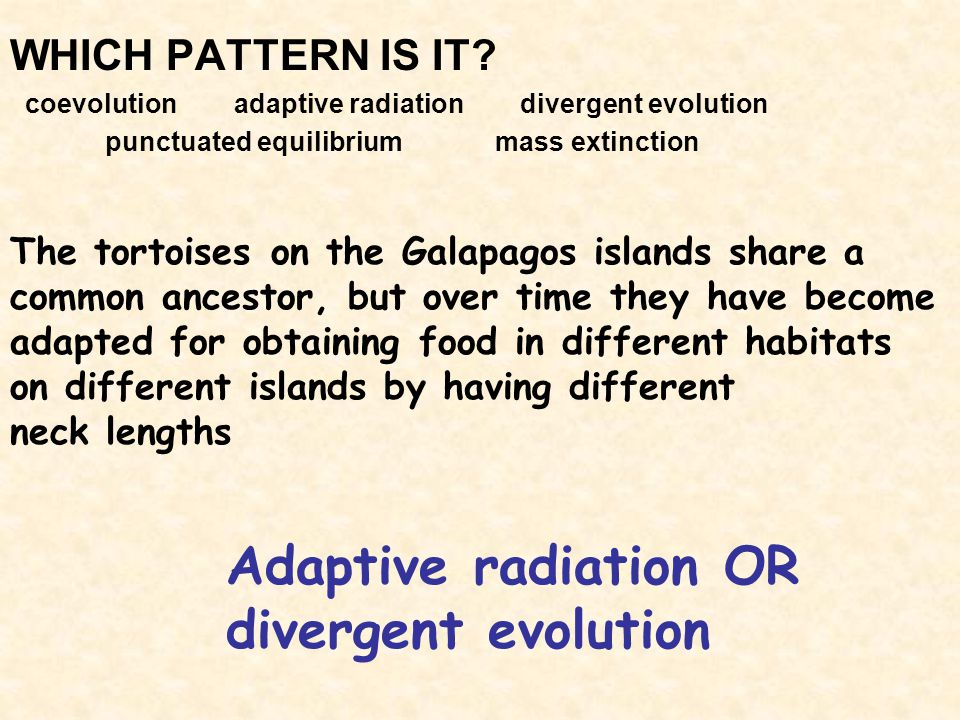 Adaptive radiation OR divergent evolution