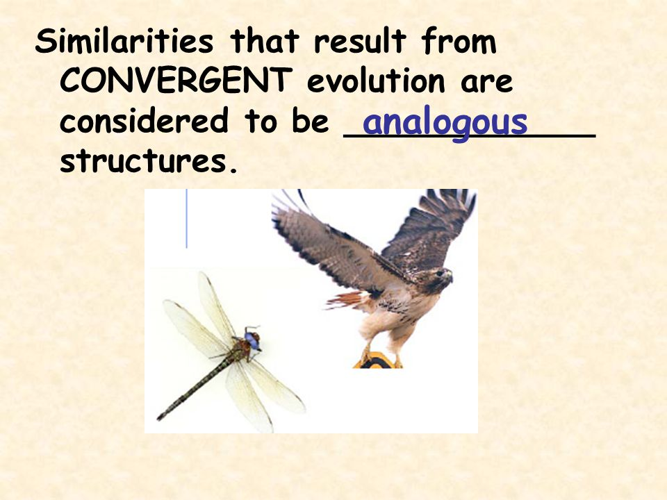 Similarities that result from CONVERGENT evolution are considered to be ____________ structures.
