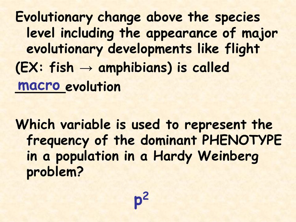 Evolutionary change above the species level including the appearance of major evolutionary developments like flight
