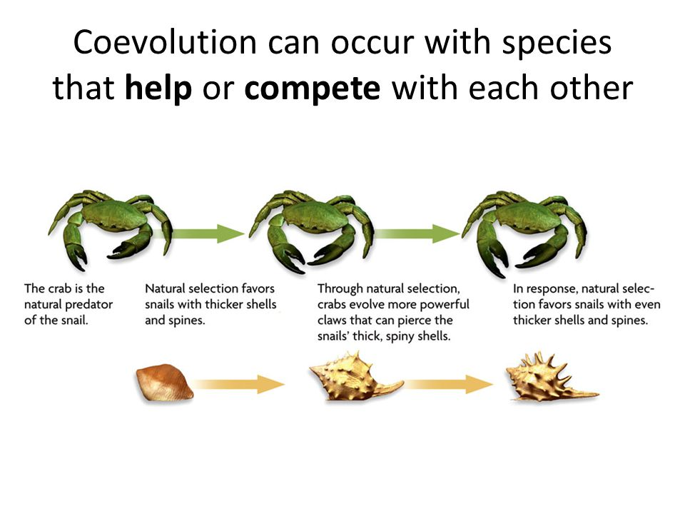 Coevolution can occur with species that help or compete with each other